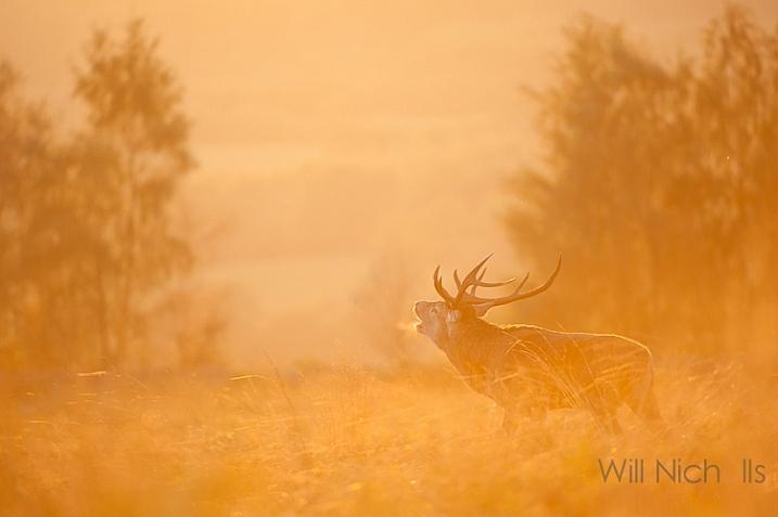 مُد نیمه خودکار بهترین انتخاب برای عکاسی حیات وحش